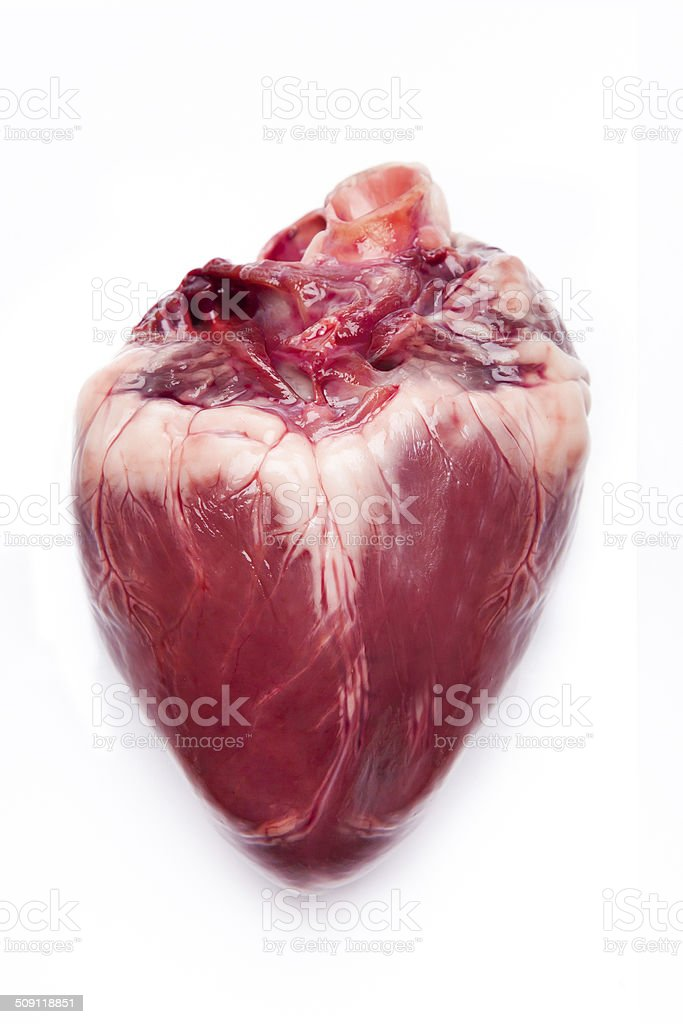 Pig hearts. stock photo