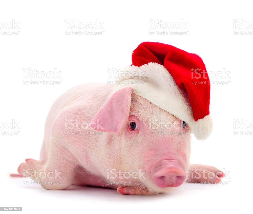 Schwein in einem roten Weihnachtsmann-Hut. – Foto