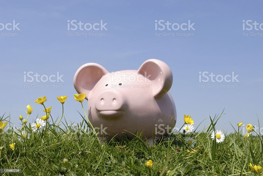 pig in clover royalty-free stock photo