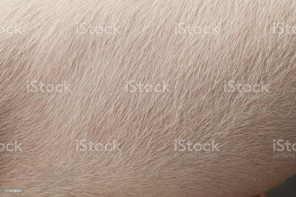 Pig skin stock photo