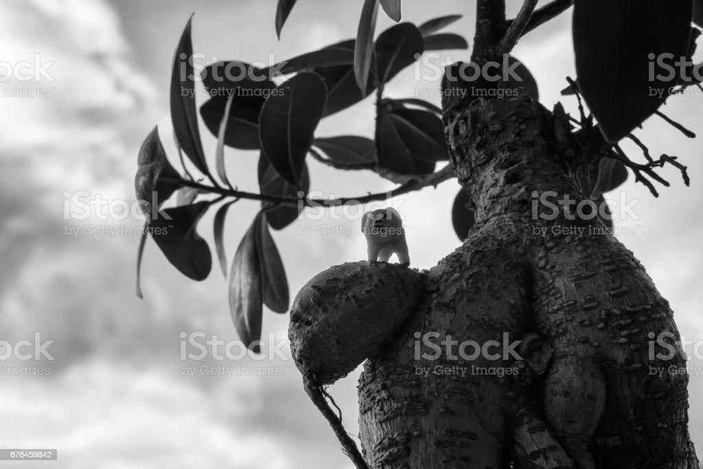 Pig toy on ficus bonsai stock photo