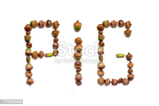 istock Pig. word made up of acorns of oak 1019329446
