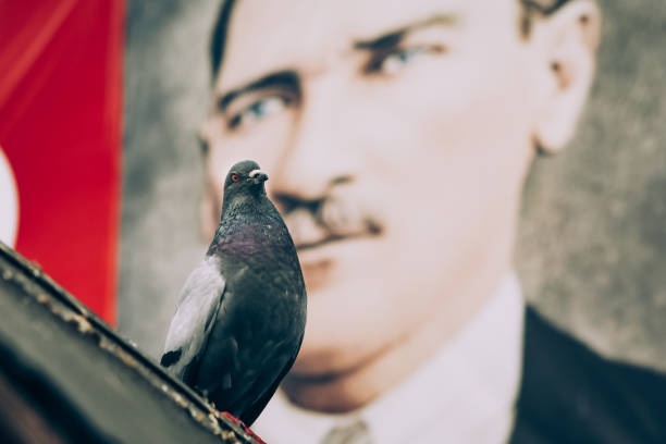 pigeon and mustafa kemal ataturk - number 19 stock photos and pictures