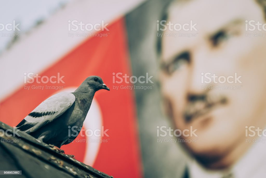 Pigeon and Mustafa Kemal Ataturk stock photo