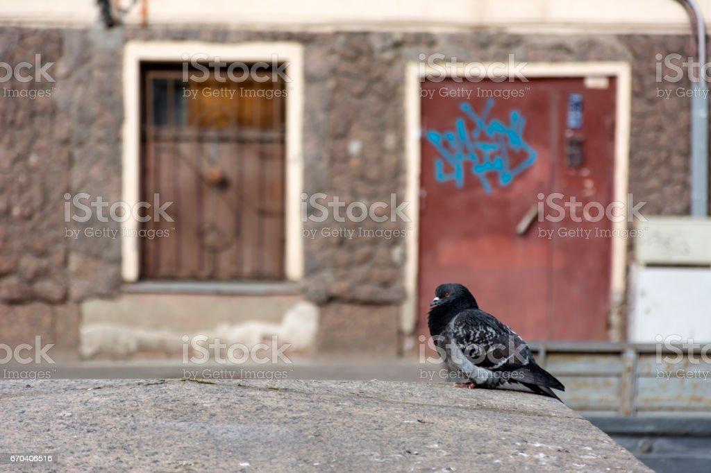 zeemeermin — Stockfoto © rudall30 #9404021