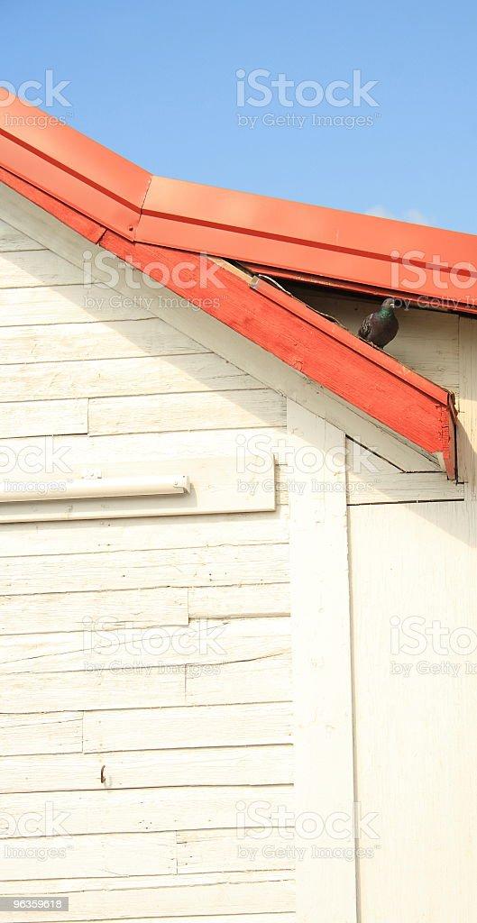 pigeon hiding royalty-free stock photo