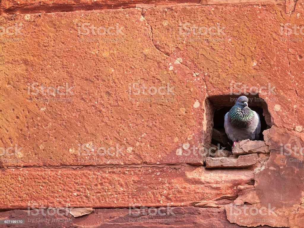 Pigeon Hole in Agra Fort stock photo