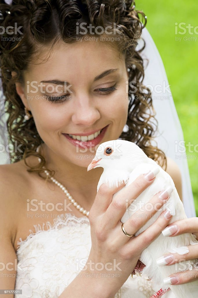 Pigeon in hands royalty-free stock photo
