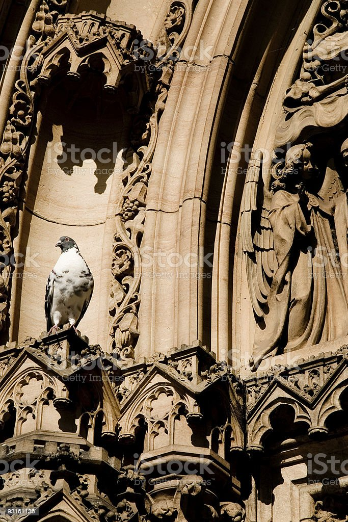 Pigeon in Prague stock photo