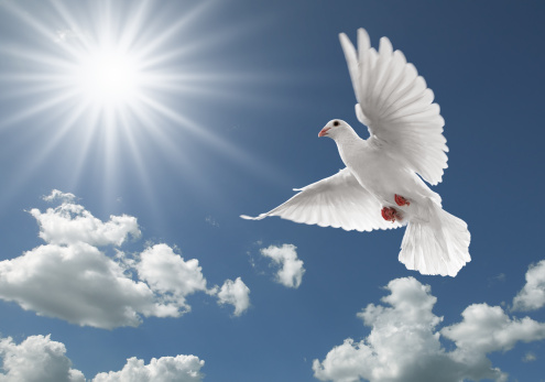Pigeon In The Sky Stock Photo - Download Image Now
