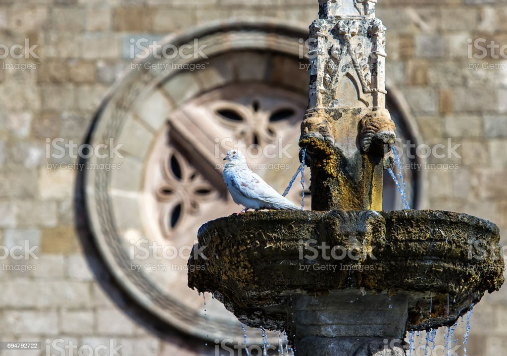 pigeon is sitting on fountain in the background round frame historic building stock photo