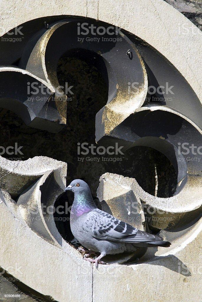 Pigeon on Church royalty-free stock photo