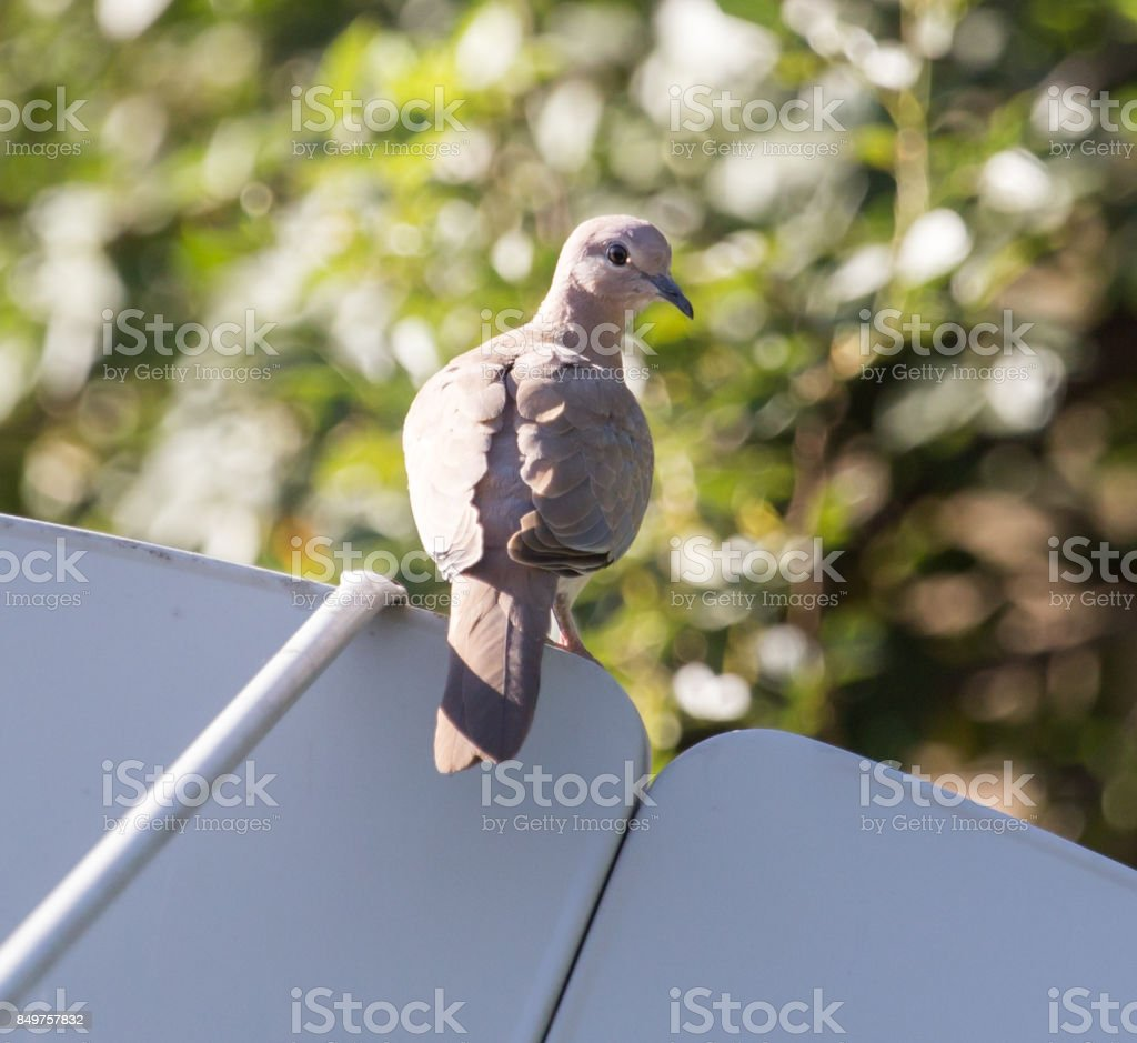 pigeon on nature stock photo