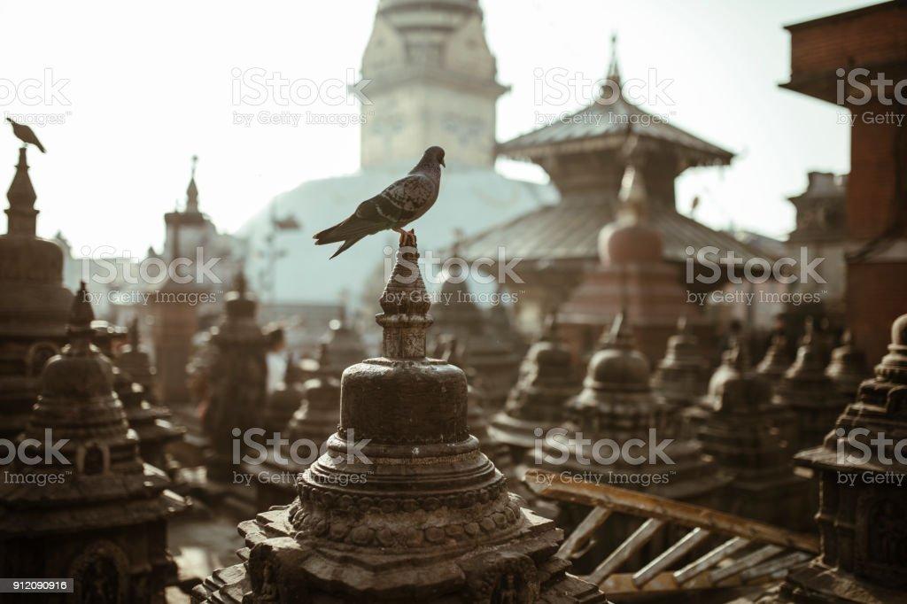 Pigeon on old Buddha statue at Swayambhunath temple stock photo