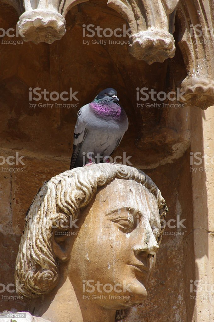Pigeon on saint stock photo