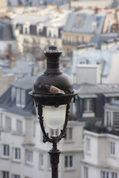 Taube auf die Lampe – Foto