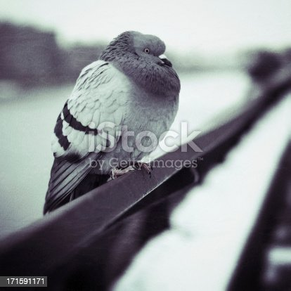 Pigeon sitting on a railing along the East River in Manhattan, New York City. Grain and texture added.