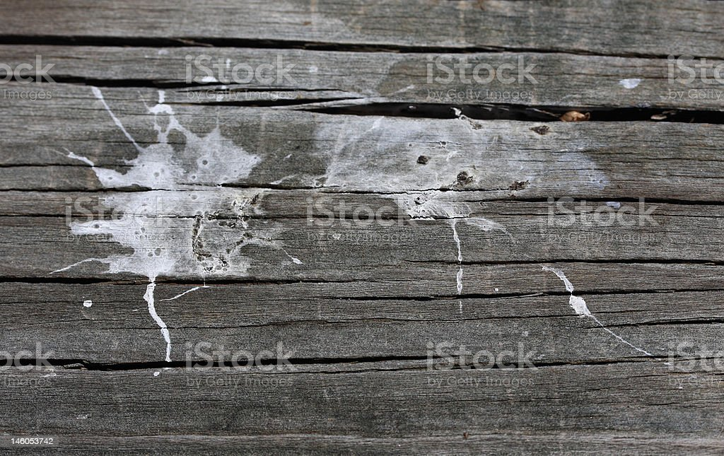 Pigeon Poo stock photo
