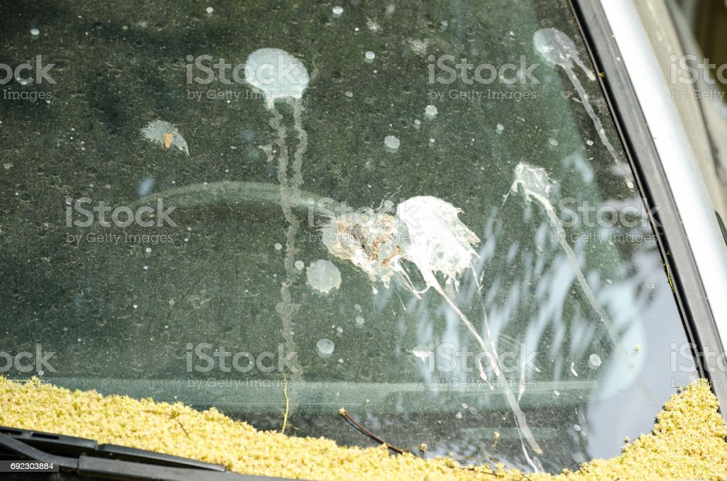 Pigeon poop on dirty car windshield. stock photo