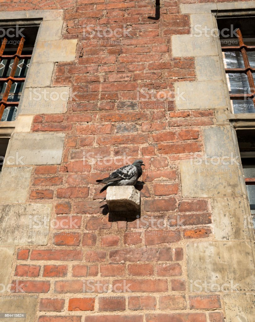 Pigeon rests on old Town Hall in Gdansk, Poland stock photo