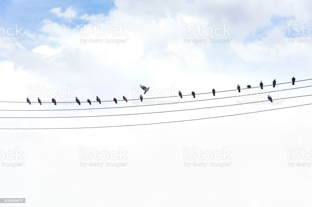 pigeon silhouette, bird on the cable rope, abstract background, stock photo