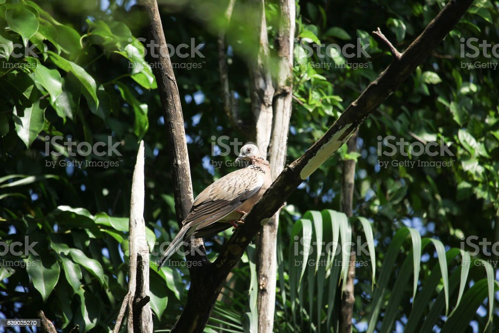 Pigeon sitting on tree branch stock photo