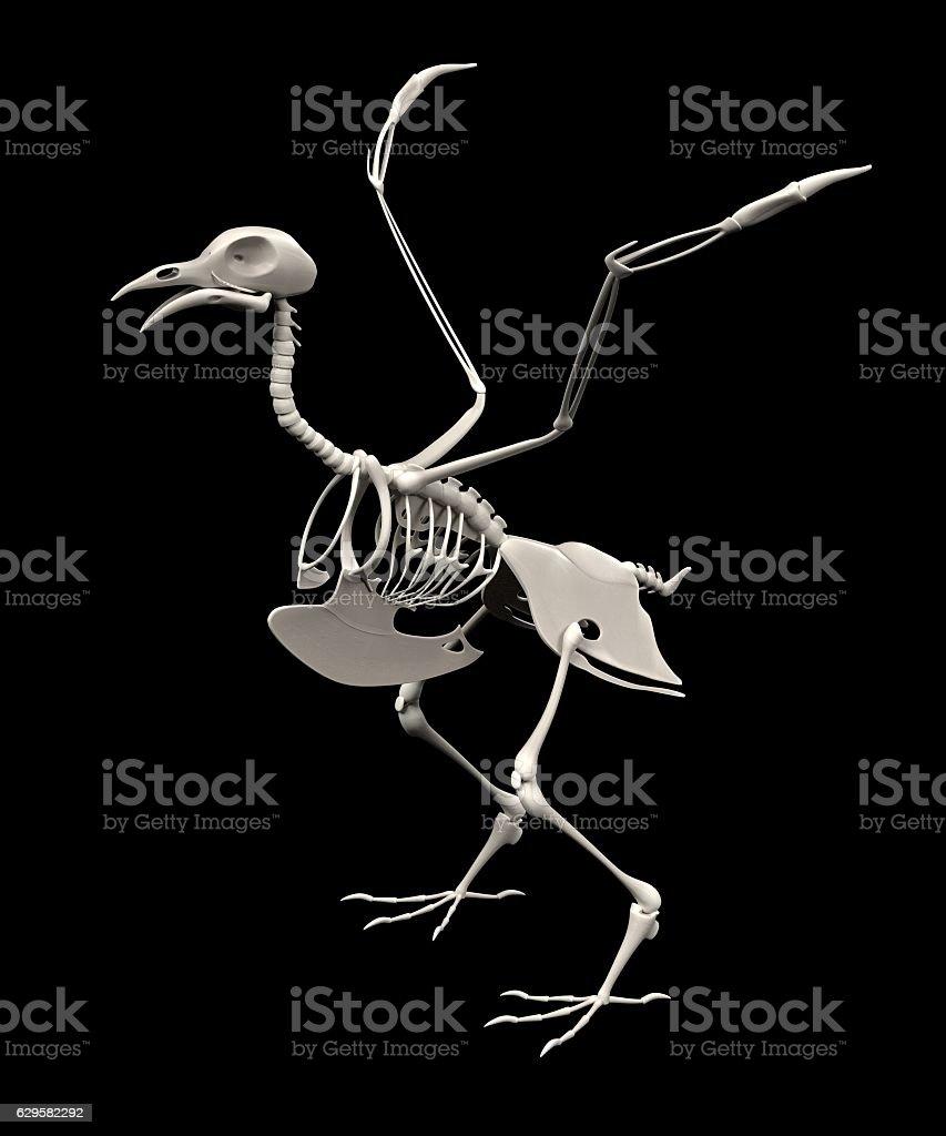 Pigeon Skeleton - Fotografía de stock y más imágenes de Anatomía ...