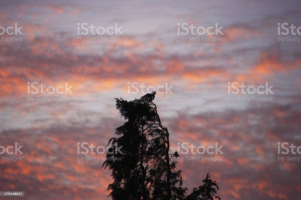 Pigeon up in the tree royalty-free stock photo