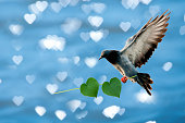 pigeons and heart shaped leaves, on the background of heart shaped.