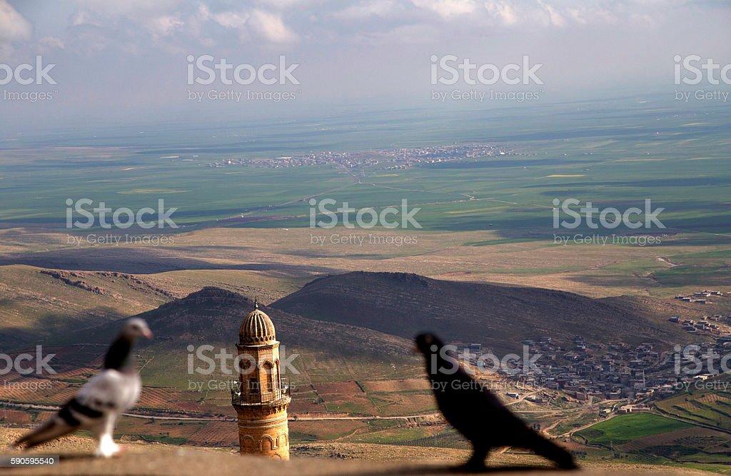 Pigeons and Ulu Mosque Minaret. stock photo