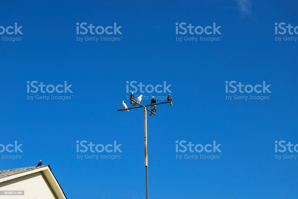 Pigeons are sitting on the crossbar in the form of a cross. stock photo