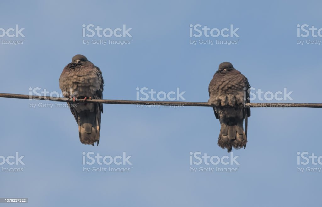 pigeons are sitting on the wire