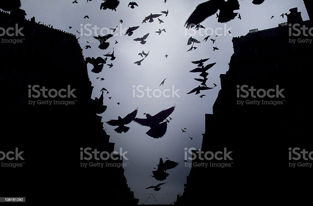 Pigeons birds flying in paris royalty-free stock photo