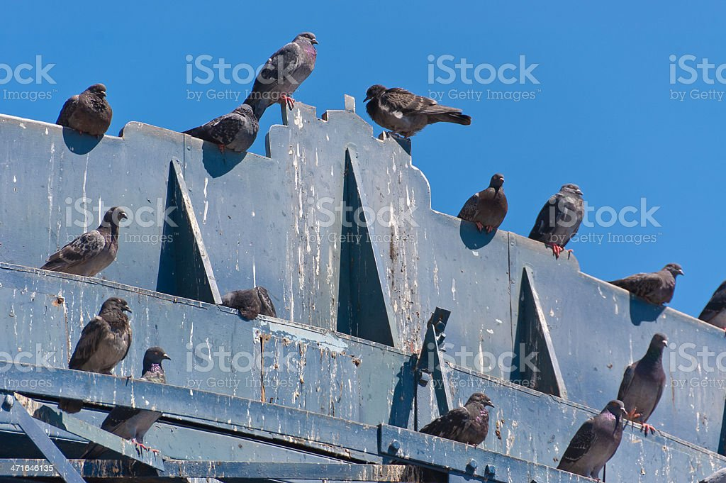 Pigeon's crap stock photo