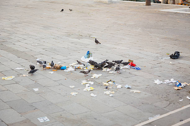 alimentação de pombos em veneza no lixo - desperdício alimentar imagens e fotografias de stock