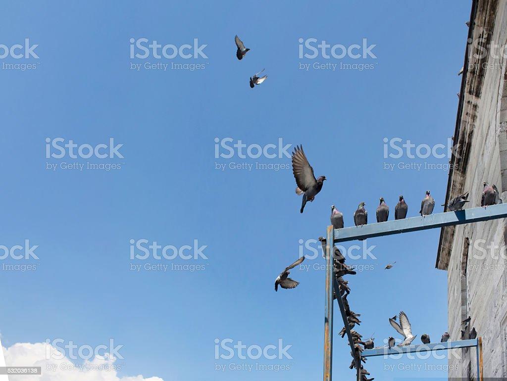 Palomas Volando En Frente De La Mezquita De Yeni En Eminonuistanbul