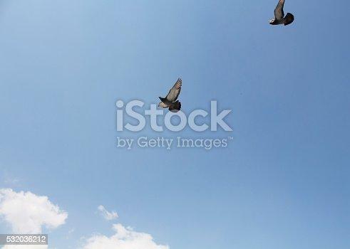 Istock Palomas Volando En Frente De La Mezquita De Yeni En Eminonu