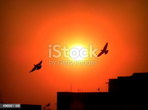 Pigeons flying free at dusk in front of the setting sun.