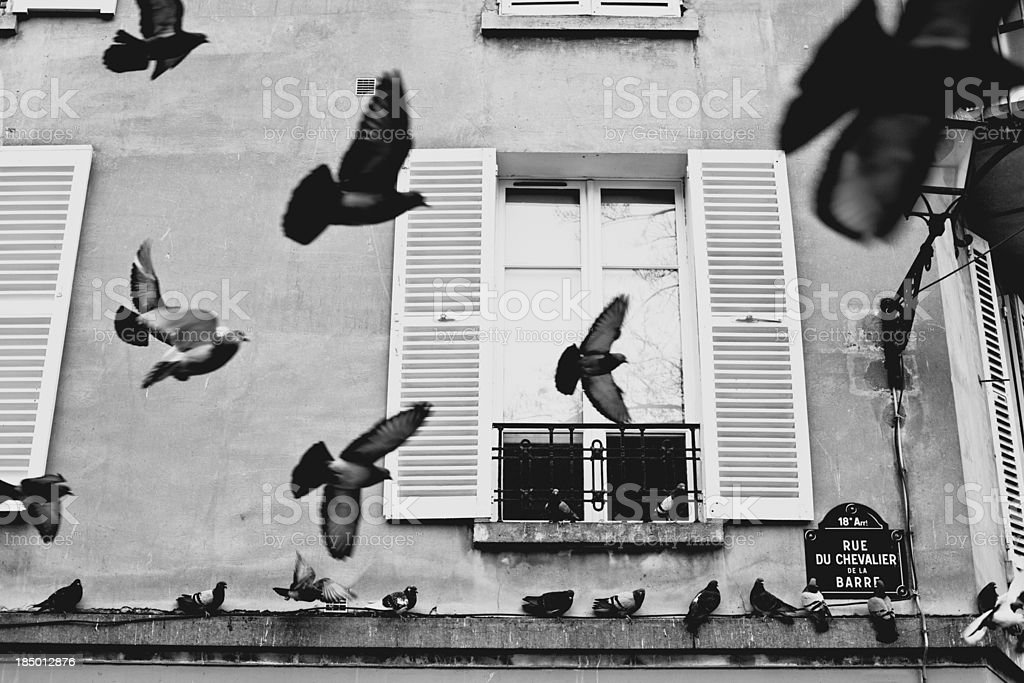 Pigeons Flying in the Streets of Paris, Montmartre stock photo