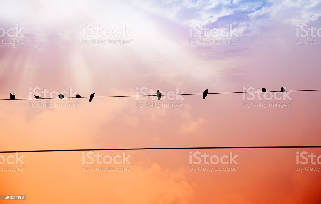Pigeons In A Row stock photo