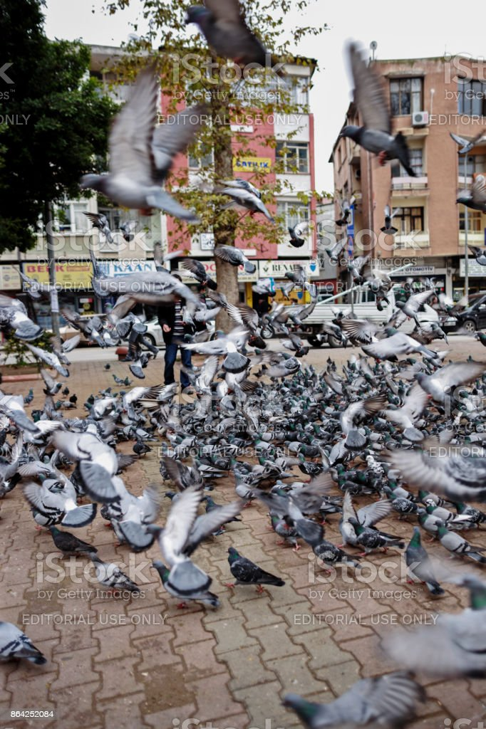 Pigeons in Center of Adana ,Turkey 13-01-2010 royalty-free stock photo