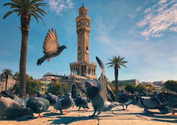 Pigeons in Konak Square around Clock Tower of Izmir stock photo