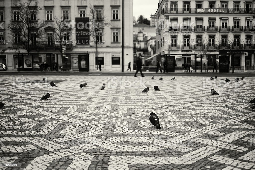 Pigeons in Lisbon royalty-free stock photo