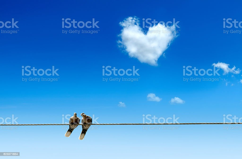 pigeons love on power line stock photo
