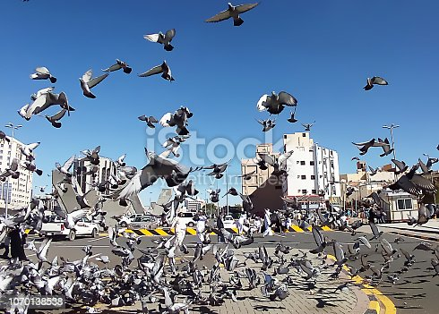 pigeons flying near the prophet's Mosque,Medina,Saudi Arabia