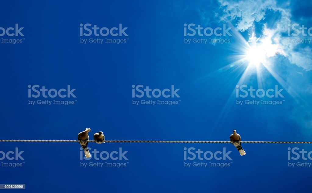 pigeons on power line stock photo