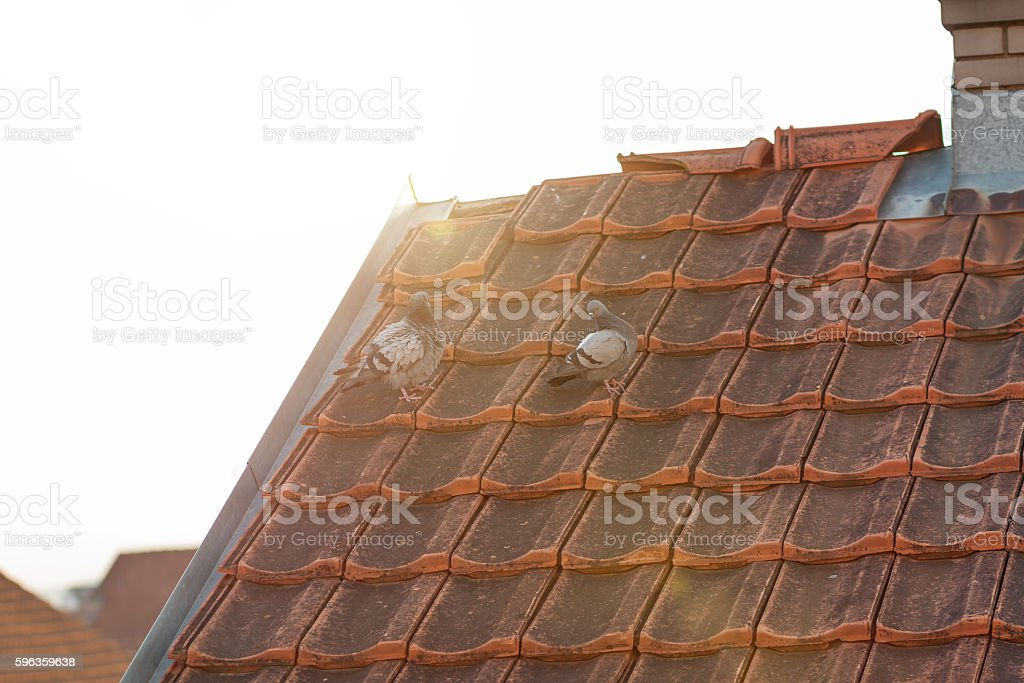pigeons on red rooftop in the evening sunshine royalty-free stock photo