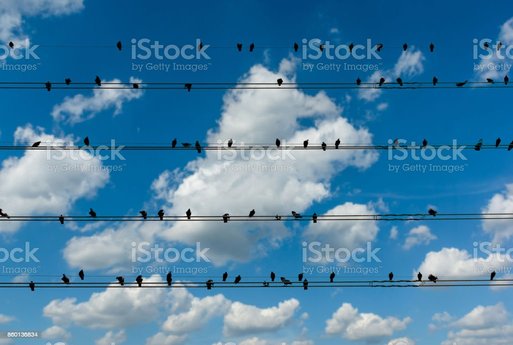 Pigeons on the electrical wires isolated on blue sly with cloud background stock photo