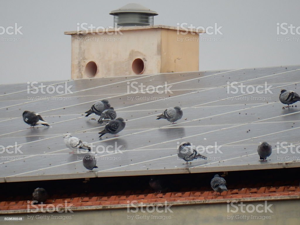 Pigeons on the roof photovoltaic stock photo