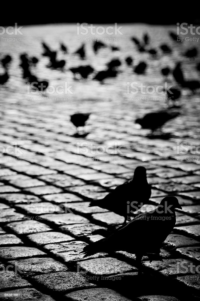 Pigeons on the street royalty-free stock photo